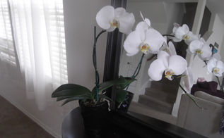 flowers orchid care tips, flowers, gardening