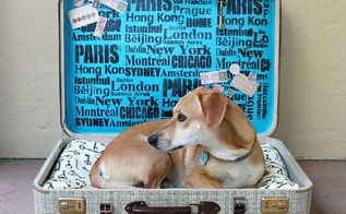 repurpose suitcase pet bed, pets animals, repurposing upcycling, reupholster