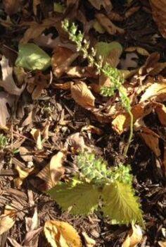 gardening plnt identifying, gardening
