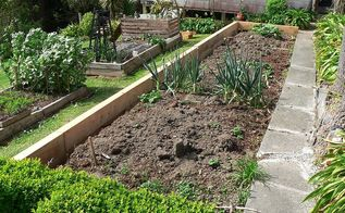 new vegetable edging and black iris in bloom, concrete masonry, diy, gardening