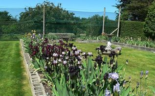 the iris garden inspiration, flowers, gardening, landscape