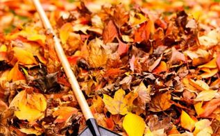 10 fall garden clean up tips, flowers, gardening, lawn care