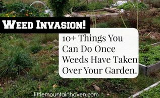 things you can do after weeds have taken over your garden, gardening