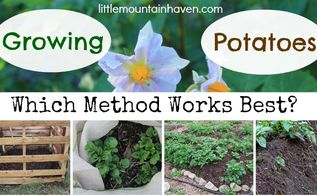 growing potatoes methods, gardening