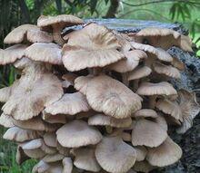 mushrooms gardening tips, gardening