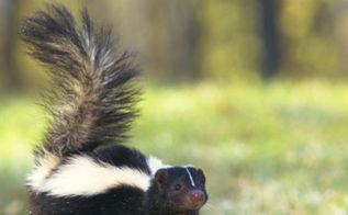 need a skunk control expert, pest control, pets animals