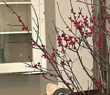 easy diy winterberry branches for christmas, christmas decorations, crafts, seasonal holiday decor, Real winterberry branches