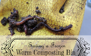 tips for worm composting, composting, gardening, go green, homesteading
