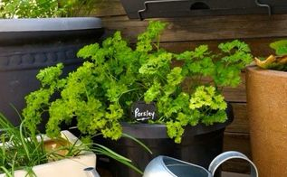 diy 5 tips to growing your own herbs in a small space