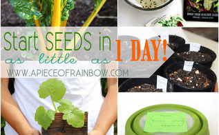 how to start seeds in as little as one day, diy, gardening, homesteading, how to, outdoor living