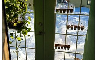 q time to start the seeds but what to plant suggestions please, flowers, gardening, Living Ledge Seedies Vertical Seed Starting Containers hung and ready to plant Johnson City NY