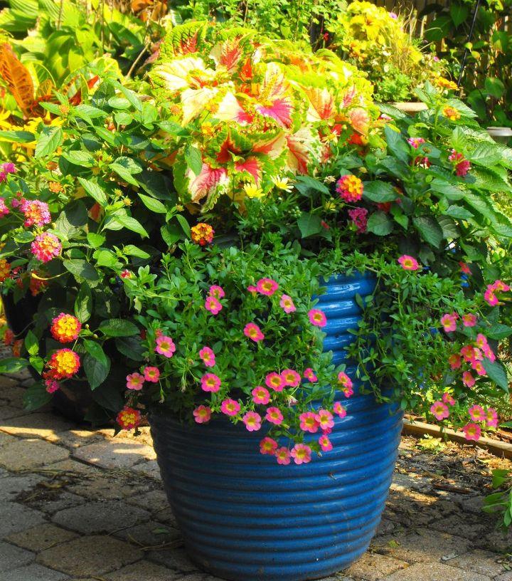 my container gardening  hometalk, Beautiful flower