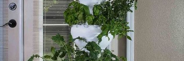 q anyone using a indoor hydroponic system to grow produce indoors, container gardening, gardening, go green, homesteading, Foody 12 Hydroponic indoor growing system