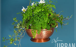 colander hanging planter, container gardening, flowers, gardening, home decor, repurposing upcycling