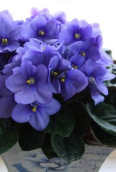 three ways to propagate african violets, flowers, gardening, home decor