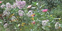 attracting butterflies to your garden, flowers, gardening