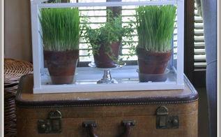 spring redefined ornamental wheat grass 101, container gardening, gardening, home decor, terrarium