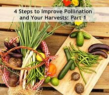 4 steps to improve pollination your harvests part 1, gardening, go green, homesteading, Bees are vital for an abundant harvest
