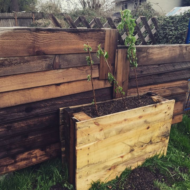 Upright Pallet Raised Beds Hometalk