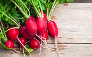 easy vegetables for beginner gardeners, gardening, homesteading