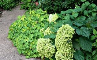 http gardenmatter com easy pruning guide, flowers, gardening, perennial