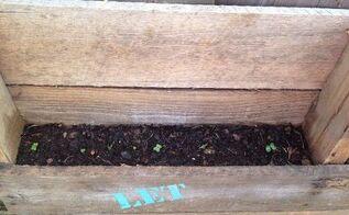vertical pallet garden, container gardening, gardening, homesteading, pallet, repurposing upcycling