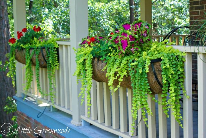 Best plants for hanging baskets hometalk - Growing petunias pots balconies porches ...
