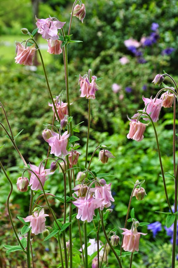 Great ideas for spring flowering perennials garden pics and tips jacquie s amazing spring garden flowers gardening perennial mightylinksfo