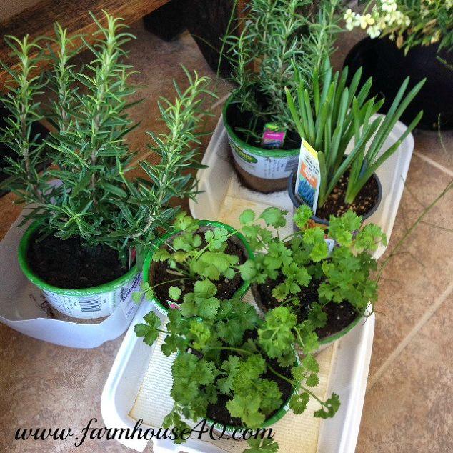 container herb garden  container gardening  gardening  homesteading. Container Herb Garden   Hometalk