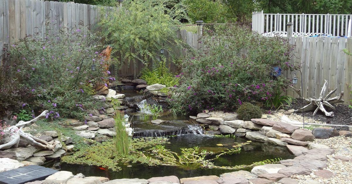 Diy Water Garden Hometalk