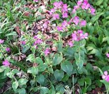 q plant identification help needed, flowers, gardening, pretty flowering plant