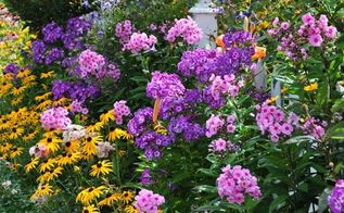 annual perennial and biennial plants what s the difference, flowers, gardening