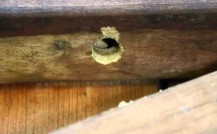 repair carpenter bee damage, home maintenance repairs, how to