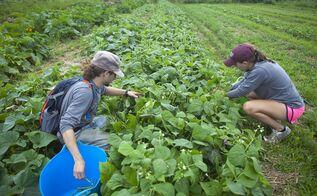 inside the flourishing world of college farm programs