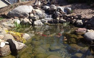 backyard fish pond and waterfall, landscape, ponds water features