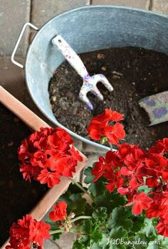5 tips for beautiful mixed planters, container gardening, gardening, how to