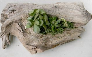 driftwood succulent centerpiece, container gardening, flowers, gardening, repurposing upcycling, succulents