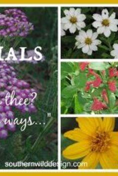 perennials, flowers, gardening, perennial