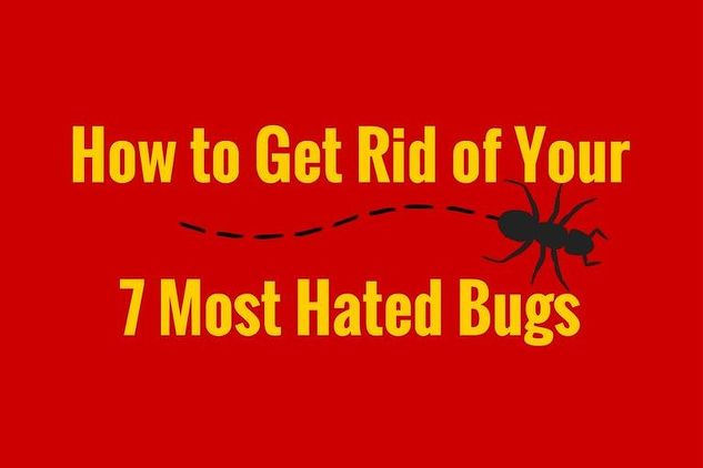 how to get rid of your 7 most hated bugs