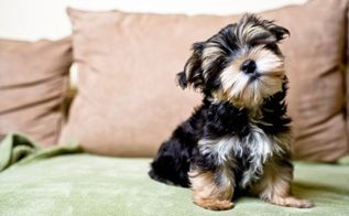the best way to get rid of pet hair that you ve never tried, cleaning tips, pets animals