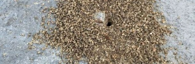 q good and natural recipe for ant killer, go green, pest control