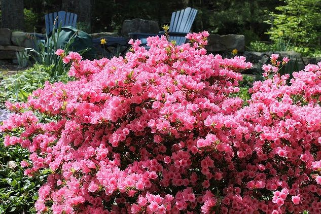 your spring bloom cheat sheet 11 flowers everyone should know