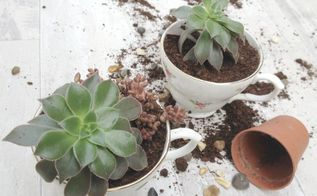 vintage teacup planters tutorial, container gardening, gardening, how to, repurposing upcycling, succulents