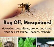 all natural bug spray recipe, gardening, pest control