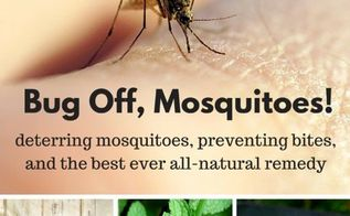 all natural bug spray recipe, gardening, pest control