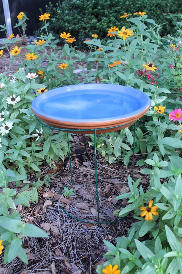 Diy tomato cage bird bath hometalk for What s new in bathrooms 2015