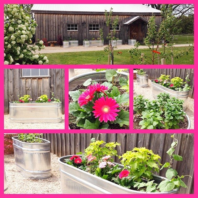 Creating A Raised Herb Garden From Water Troughs...