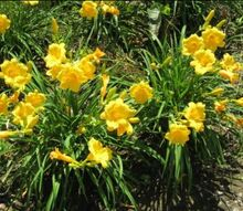 front yard and backyard gardens, flowers, gardening, outdoor living