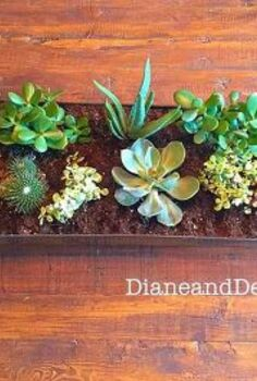 diy succulent centerpiece, container gardening, flowers, gardening, home decor, succulents
