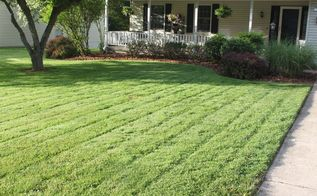 6 tips to a great lawn without using chemicals, gardening, go green, landscape, lawn care, Mowing high keeps weeds out of the lawn